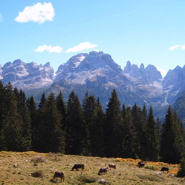 Adamello Brenta Nature Park